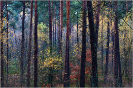 Mark Scheper - Colorful autumn forest