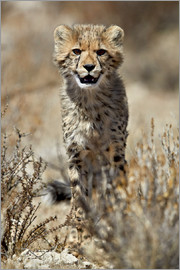 James Hager - Cheetah cub