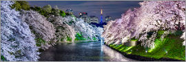Jan Christopher Becke - Chidorigafuchi in Tokyo Japan in spring with cherry blossom