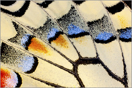 Darrell Gulin - Close-up detail Wing Pattern of Butterfly