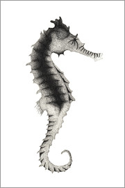 Close-up view of seahorse