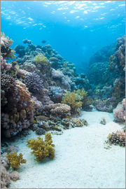 Mark Doherty - Coral reef scene close to the ocean surface, Ras Mohammed National Park, off Sharm el Sheikh, Sinai