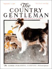 Remsberg - Country Gentleman (Dog)