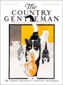 Remsberg - Country Gentleman (cat family)