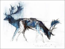 Mark Adlington - Deers