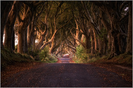 Dennis Fischer - Dark hedges, road through the hedges, Ireland