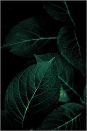 Mareike Böhmer Photography - Dark Leaves 1