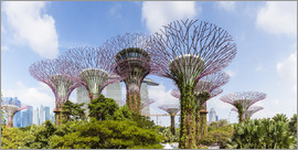 Matteo Colombo - The Supertree grove in Singapore