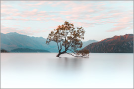 Nicky Price - The wanaka tree