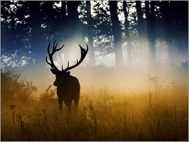 Alex Saberi - The silhouette of a red deer, Cervus elaphus, in the woods