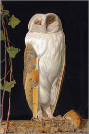 William James Webbe - The White Owl