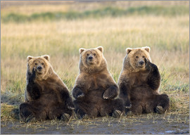 Gary Schultz - Three Grizzlies in the meadow