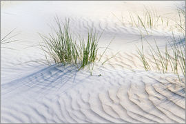 Jürgen Klust - Dunegrasses in the sand