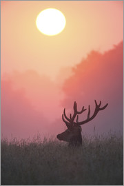 Alex Saberi - A male deer Stag at sunset