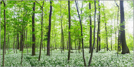 Benjamin Butschell - A forest in springtime with wild garlic