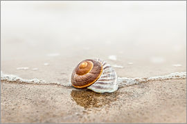 Lonely shell on a beach