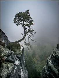 Andreas Wonisch - Lonely Tree on the Brink