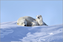 Polar bear mother and cub