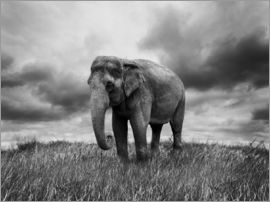 Elephant standing in the grass