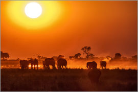 Roberto Sysa Moiola - Elephants at sunset, Chobe Park, Botswana, Africa