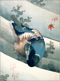 Katsushika Hokusai - Duck Swimming in Water