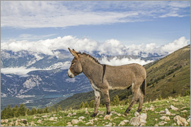 Donkeys on a lonely mountain meadow