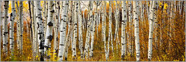 Ron Dahlquist - Aspens in autumn