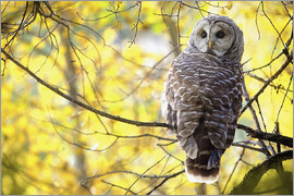Steve Nagy - owl on branch