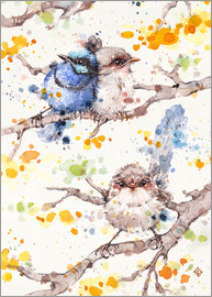 Sillier Than Sally - Family Life (fairy Wren)