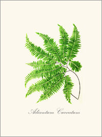 Patruschka - ferns6