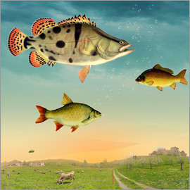 Mark Ashkenazi - fishes
