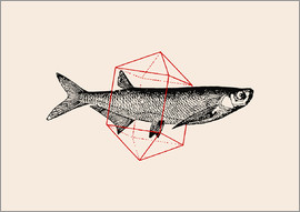 Florent Bodart - Fish In Geometrics II