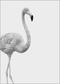 Finlay and Noa - Flamant rose en noir et blanc
