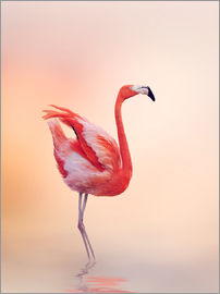 Flamingo Feeling