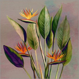 Mandy Reinmuth - Flamingo Flowers