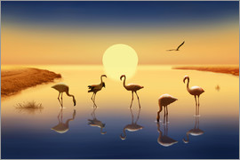 Monika Jüngling - Flamingos in the evening sun