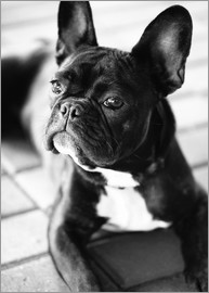 Falko Follert Art-FF77 - French Bulldog