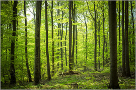 Oliver Henze - Fresh Green - Beech forest in Harz