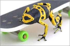 Corey Hochachka - Frog On A Skateboard