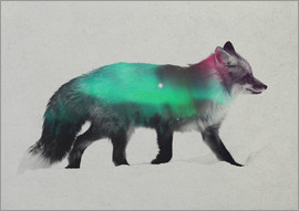 Andreas Lie - Fox In The Aurora Borealis
