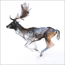 Mark Adlington - Galloping Buck