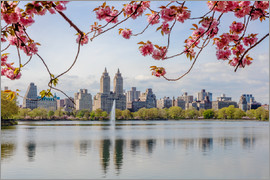 Matteo Colombo - Buildings reflected in lake with cherry flowers in spring, Central Park, New York, USA