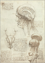 Leonardo da Vinci - Brain and Skull
