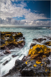 Markus Ulrich - Yellow Seaweed at the Coast of Big Island, Hawaii