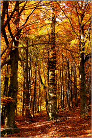 yellow trees in a forest