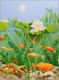 Pat Scott - Gold fish pond
