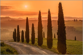 Achim Thomae - Golden Morning - Tuscany