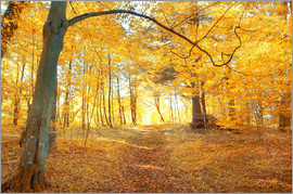 Golden autumn forest