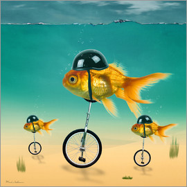 Mark Ashkenazi - gold fish