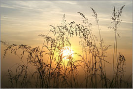 Bernhard Kaiser - Grasses in Sunrise 2
